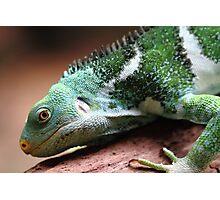 """Lizard"" Photographic Print"