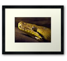 Low Light Snake closeup Framed Print