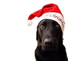 Not so merry Christmas Labrador  by Jen Martin