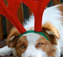 Santa's Reindeer by Renee Hubbard Fine Art Photography
