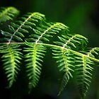 Bracken by Dottie11