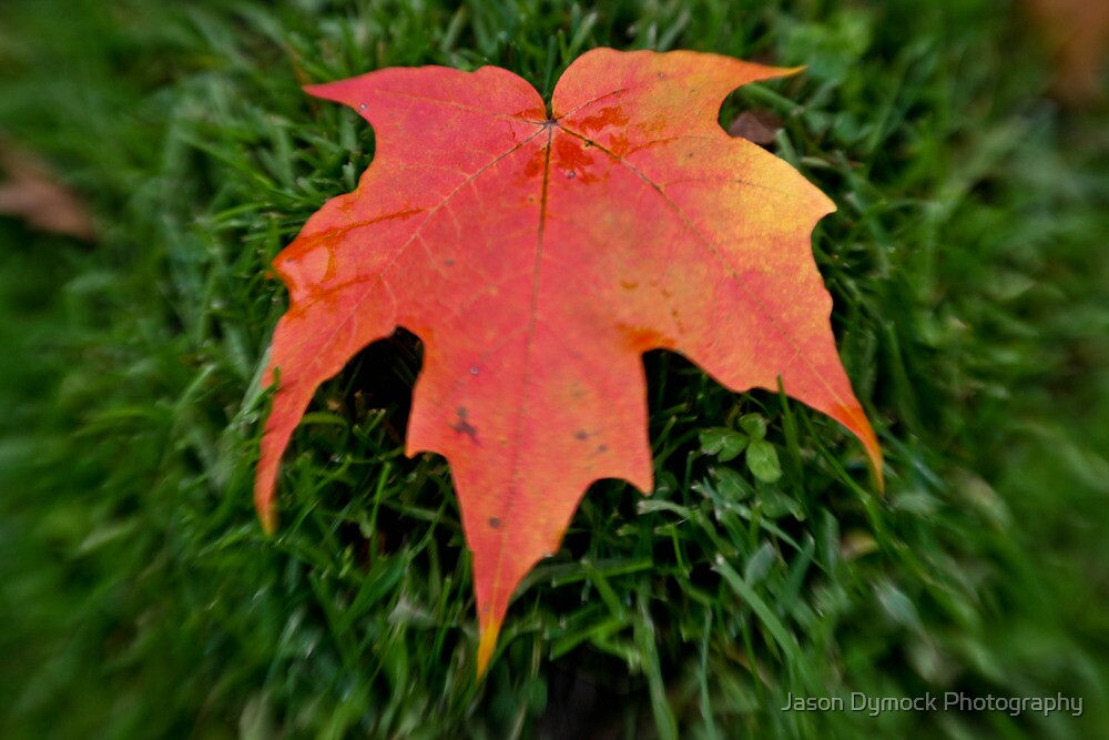 Oh Canada =) by Jason Dymock Photography
