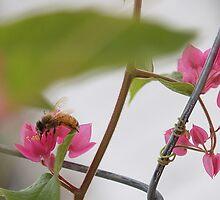 the bee by Elisabeth Dubois