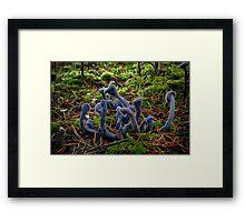 Purple Laccaria ~ Laccaria amethystine ~ Framed Print