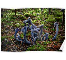 Purple Laccaria ~ Laccaria amethystine ~ Poster