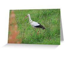 White stork Greeting Card
