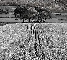 Tree Mound 01 - Cartmel Fell, Lake District, Cumbria by Simon Lupton