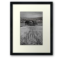 Tree Mound 01 - Cartmel Fell, Lake District, Cumbria Framed Print