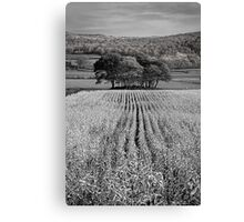 Tree Mound 01 - Cartmel Fell, Lake District, Cumbria Canvas Print