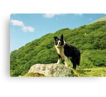 Indy Above the Hills of Llanfairfechan. Canvas Print