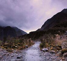 Track to Fox Glacier by Matthew Larsen
