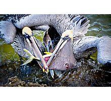 Battle at Vero Beach, FL Photographic Print