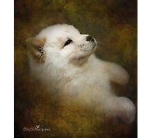 Chow pup Photographic Print
