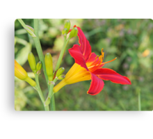 Multi-coloured lilly Canvas Print