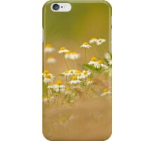 common chamomile (Anthemis cotula) iPhone Case/Skin