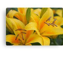 Yellow lillies Canvas Print