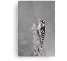 WinterTime - Downy Woodpecker Metal Print