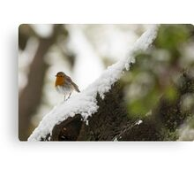 European Robin (Erithacus rubecula) perched on a branch in the snow,  Canvas Print