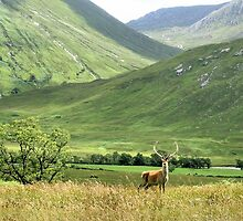 Monarch of the Glen 2  by Cat Perkinton