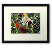 Multi-coloured flowers Framed Print
