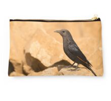 Female Tristram's Starling or Tristram's Grackle  Studio Pouch