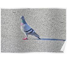 She was the prettiest pigeon, which is why she spent alot of time alone, shunned by the other females in the flock because of her poise, beauty, and colorful plumage.  Poster