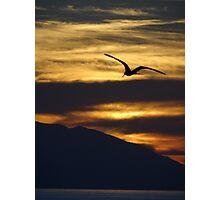 The night is coming the birds are going - La noche viene los pajaros regresan a sus lugares  Photographic Print