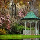 The Textures Of South Carolina by Kathy Baccari
