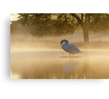 Mute Swan at sunrise Canvas Print
