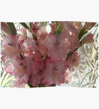 Gladiola Bouquet Poster