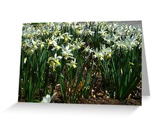 Daffodil party Greeting Card