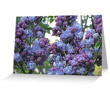 lilacs Greeting Card