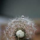 Dandelion by Alex Colcheedas