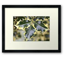 Trio Holly Leaves Framed Print