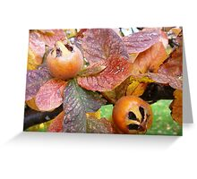 Medlars at The Sheiling, Ross Greeting Card