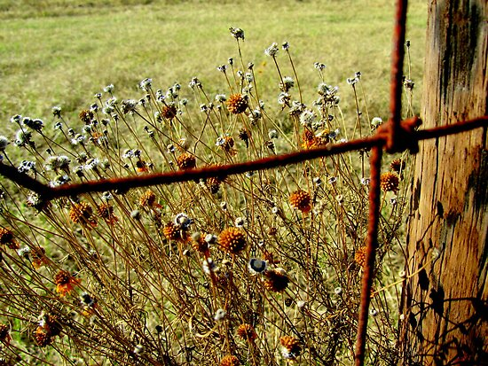 Wildflowers at the Cattle Fence by Debbie Robbins