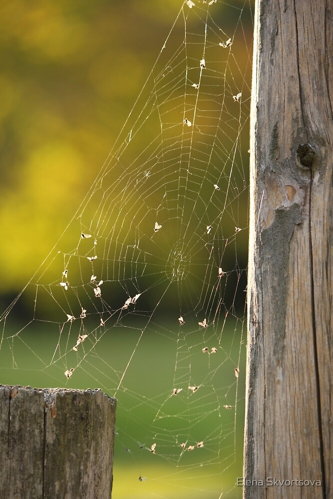 Spider Web in Autumn colours by Elena Skvortsova