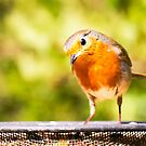 Robin by heidiannemorris