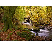 The Birks of Aberfeldy Scotland Photographic Print