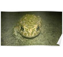 Green Toad Poster