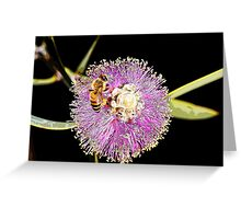 Honey myrtle (Melaleuca filifolia) Greeting Card