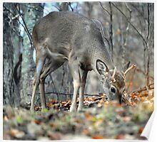Deer Graze Poster