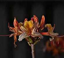 Flower Tee by Peter Hammer