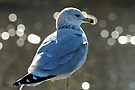 Sam the Gull Amidst the Coming of Winter by Wviolet28