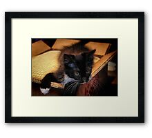 Kitten in a Box (Ready to Wrap) Framed Print