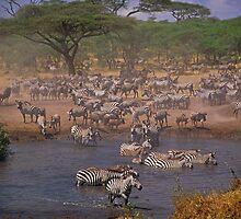 Serengeti Chaos by Haggiswonderdog
