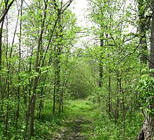 Path in Forest by Gu88dek