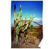 """Desert Plants - Westward Ho!"" Poster"