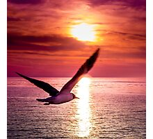 A seagull flying towards sunset Photographic Print