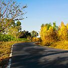 Sentiment of Perspective - Afternoon Countryside Road  by vanyahaheights